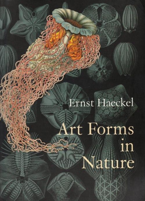 capa ernst haeckel art forms in nature