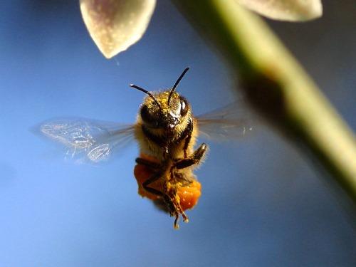 markus imhoof more than honey