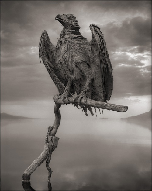 nick brandt calcified fish eagle lake natron 2010